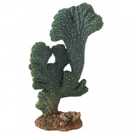 Hobby Cactus Victoria 2