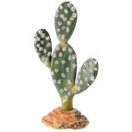Cactus Sahara