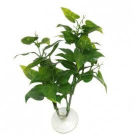 Betta Plant Philo