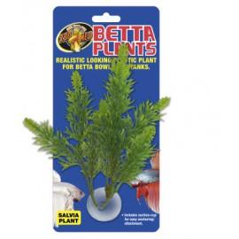 Betta Plant Salvia