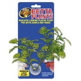 ZOOMED Betta Plant Window Leaf