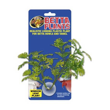 Betta Plant Window Leaf