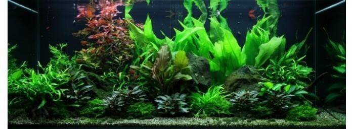 lots de plantes d 39 aquarium pour d butant paysage aquatique n 48 pour aquarium eau douce. Black Bedroom Furniture Sets. Home Design Ideas