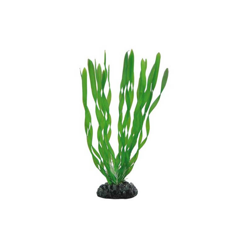 Hobby plante artificielle vallisneria 46cm aquaplante for Plante artificielle