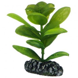 Plante artificielle Saururus 7cm