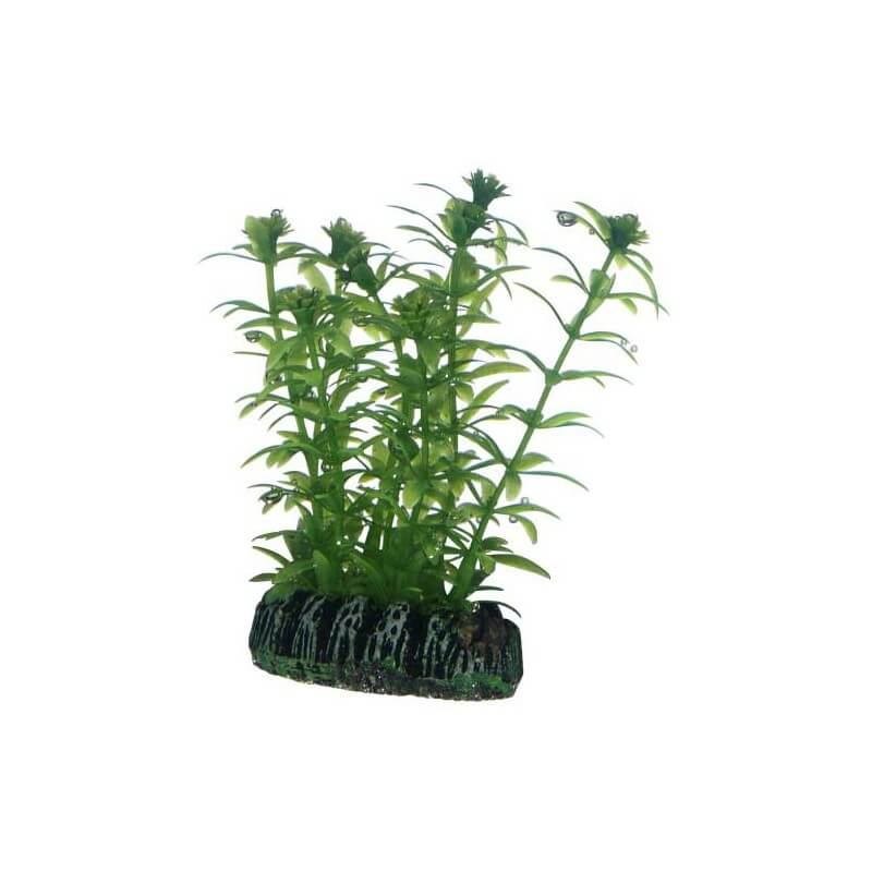 Hobby plante artificielle lagarosiphon 7cm aquaplante for Plante artificielle
