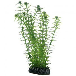 Plante artificielle Lagarosiphon 20cm