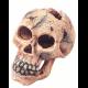 Crâne S