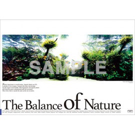 Poster ADA - The Balance of Nature - Melanotaenia boesemani
