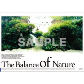 Poster ADA - The Balance of Nature - Pterophyllum altum