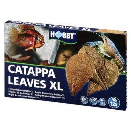 Catappa Leaves XL 12 St., SB