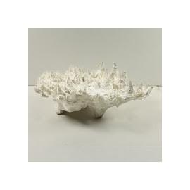 Corail staghorn blanc