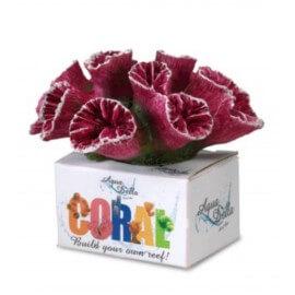 AQUA DELLA CORAL-MODULE -M- torch coral berry/ca.9,5x7,7x7cm