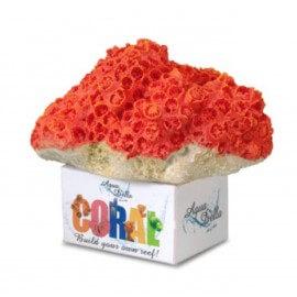 AQUA DELLA CORAL-MODULE -M- cup coral orange/ca.11,5x9,2x8,4cm