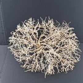White Bonsai Tree Roots WB013