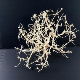 White Bonsai Tree Roots WB020