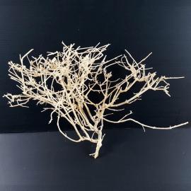 White Bonsai Tree Roots WB021