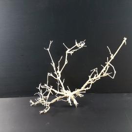 White Bonsai Tree Roots WB035