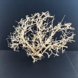 White Bonsai Tree Roots WB059