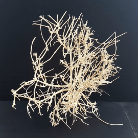 White Bonsai Tree Roots WB060