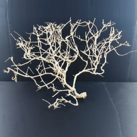 White Bonsai Tree Roots WB064
