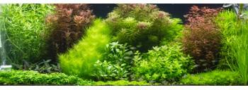 lot plante aquarium plante et aquascaping aquaplante. Black Bedroom Furniture Sets. Home Design Ideas