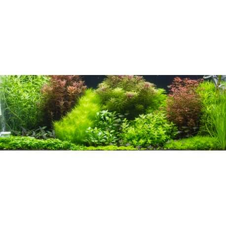 Lots de plantes d 39 aquarium interm diaire paysage for Commander des plantes