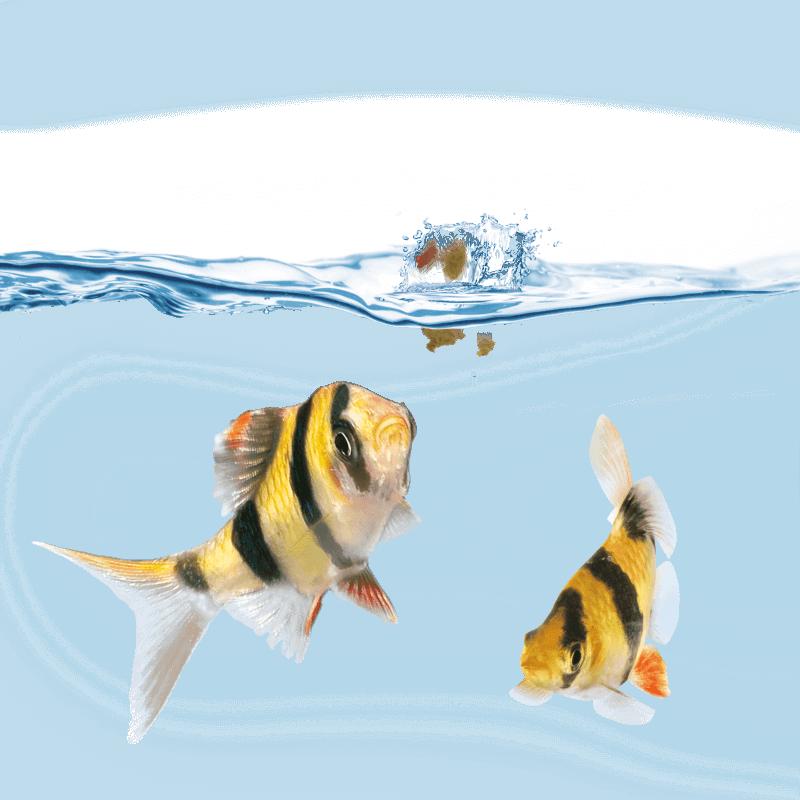 Distributeur de nourriture juwel pour aquarium for Distributeur poisson