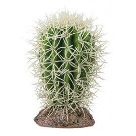 Hobby Cactus Great Basin 8x8x12,5cm