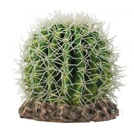 Hobby Cactus Sonora M 15x15x13cm