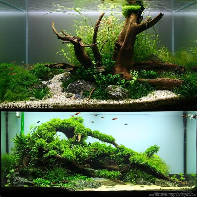 Racine moorkienholz s pour aquarium 19 5 for Racine aquarium
