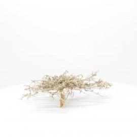 Natural Bonsai - NBC008