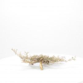 Natural Bonsai - NBC018