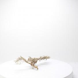 Natural Bonsai - NBC053