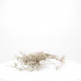 Natural Bonsai - NBC064