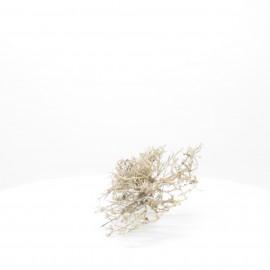 Natural Bonsai - NBC083