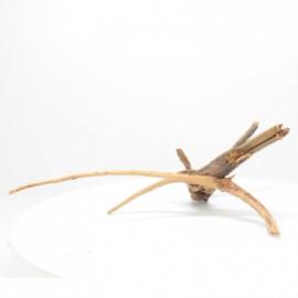 Racine Spider - SPF033