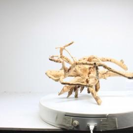 Racine Spider - SPDG12