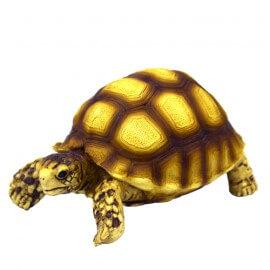 Hobby Turtle 2