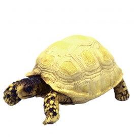 Hobby Turtle 3