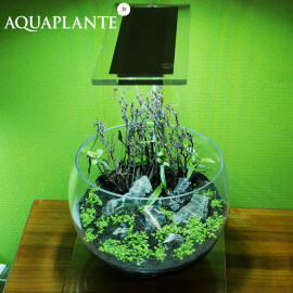 Aquaplante Kit Wabi-Kusa N°1
