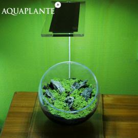 Aquaplante Kit Wabi-Kusa N°2