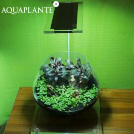 Aquaplante Kit Wabi-Kusa N°3