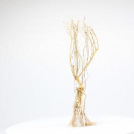 Racine Tree Roots - TR14