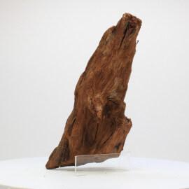 Racine De Mangrove - MGFE01