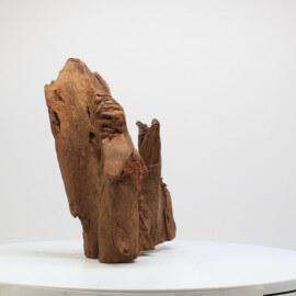 Racine De Mangrove - MGFE06