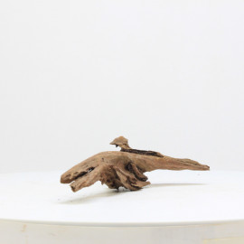 Racine De Mangrove - MGFE25