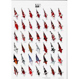 SUPERFISH Poster Koïs N°1 A4