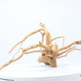 Racine Spider - SPPQ17