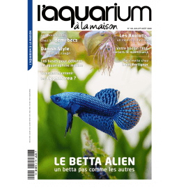Aquarium à la Maison N°140 - Le Betta Alien
